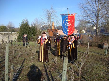 La St Vincent à Pellouailles les Vignes
