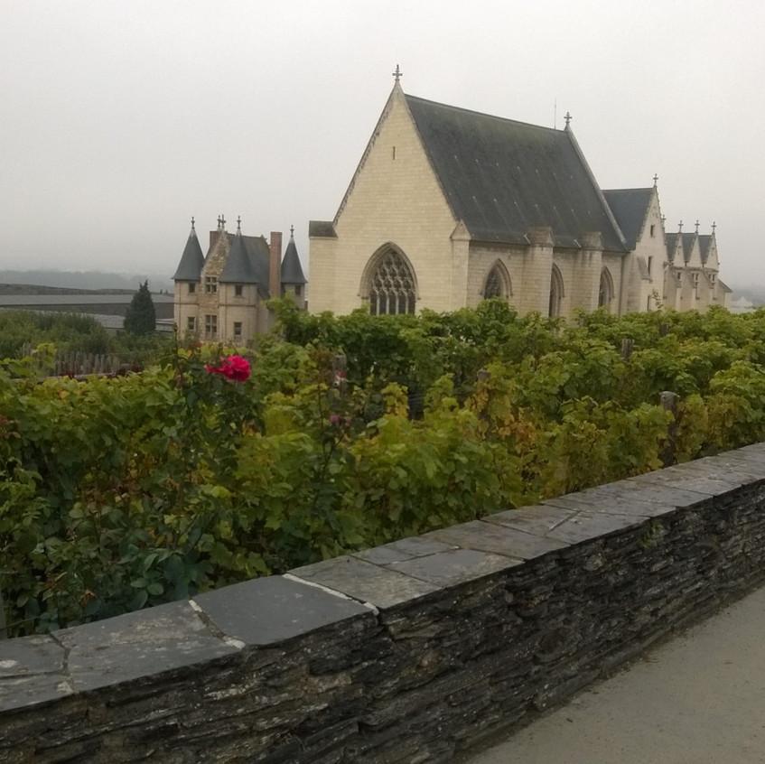 Visite des vignes du Château