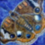 17 Encaustic Buckey Butterfly.jpg