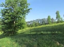 Foothills 4.jpg