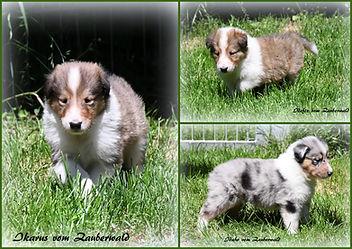 I-Wurf Bonita 12.05-010.jpg