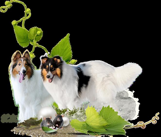Zauberwald-Hunde-deko2.png