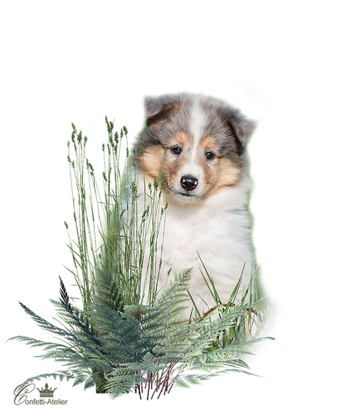 Zauberwald-Hunde-welpe.png