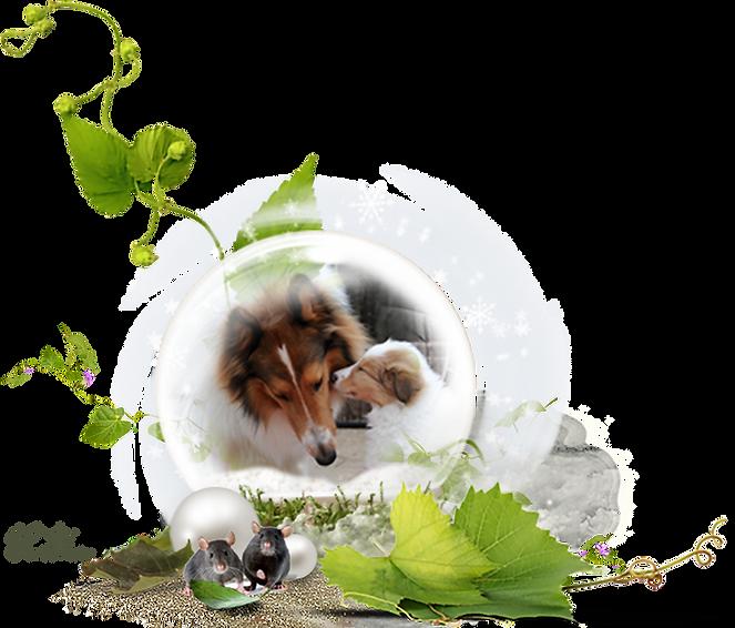 Zauberwald-Hunde-deko4.png