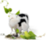 Zauberwald-Hunde-deko1.png