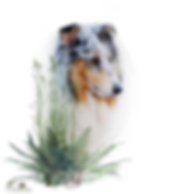 Zauberwald-Hunde-deko9.png