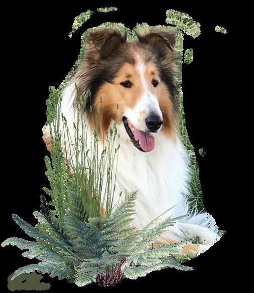 Zauberwald-Hunde-deko8.png