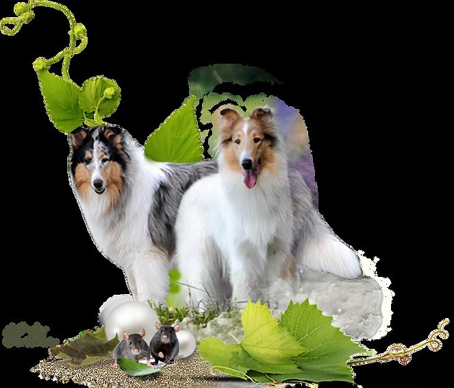 Zauberwald-Hunde-deko.png