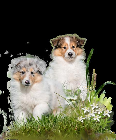 Zauberwald-Hunde-deko5a.png