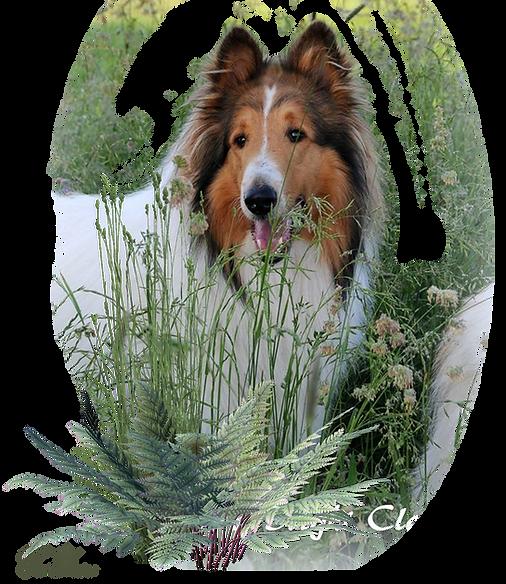 Zauberwald-Hunde-deko7a.png