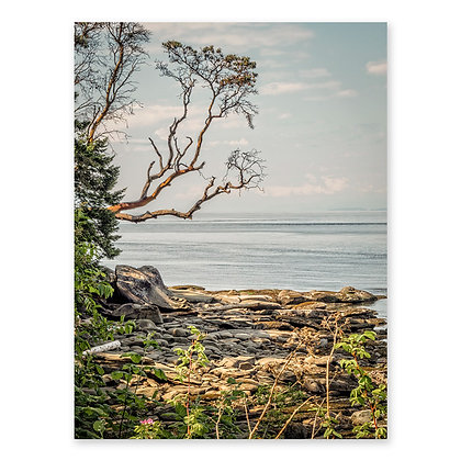 """Arbutus On The Shore"""