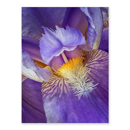 """""""Iris Flame"""""""