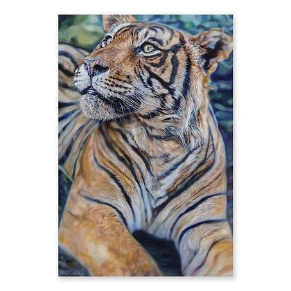 """""""Tiger Cub"""""""