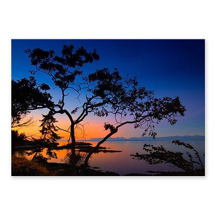 """""""Neck Point Tree"""""""