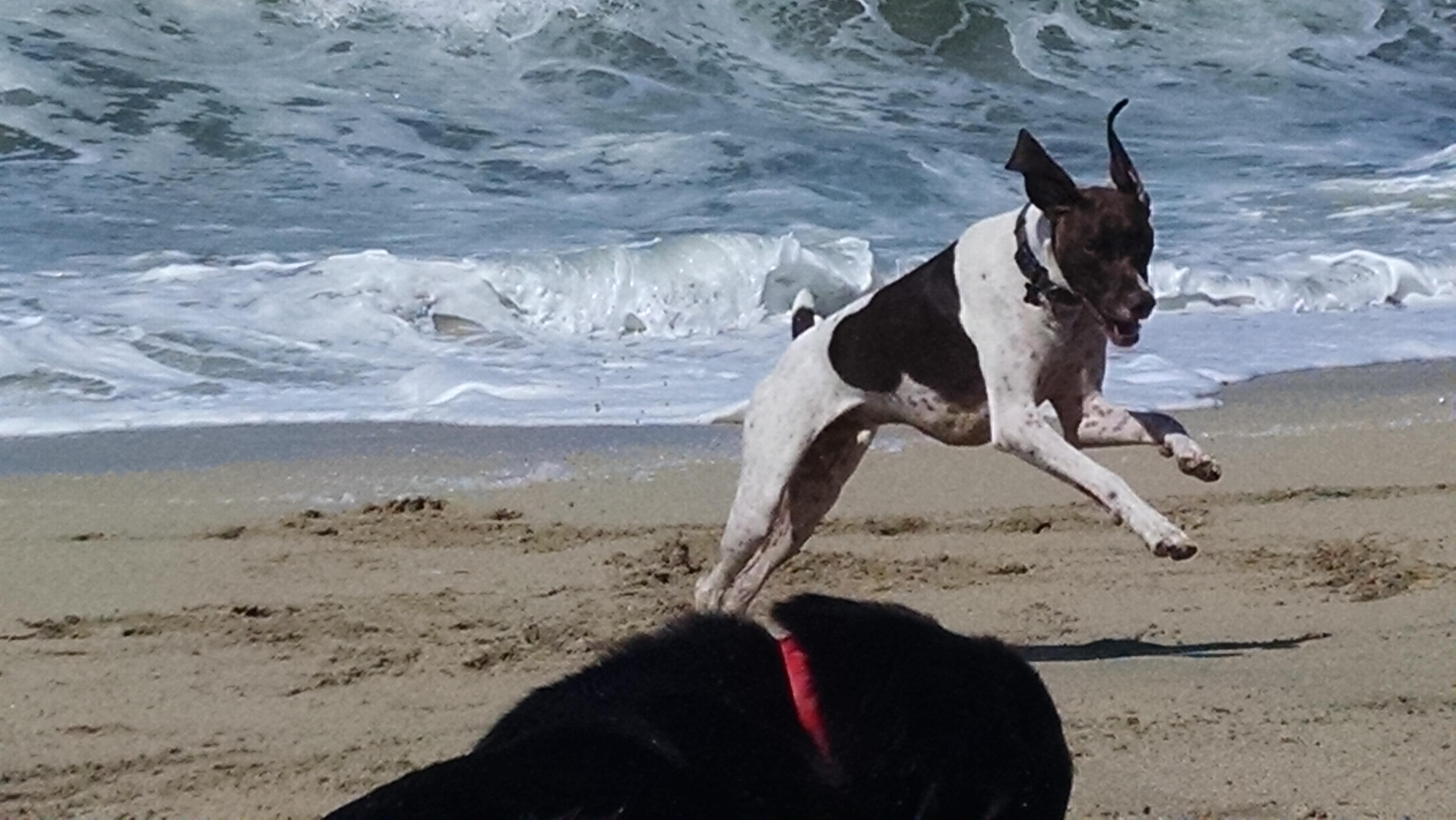 Toby, sooooo much energy!