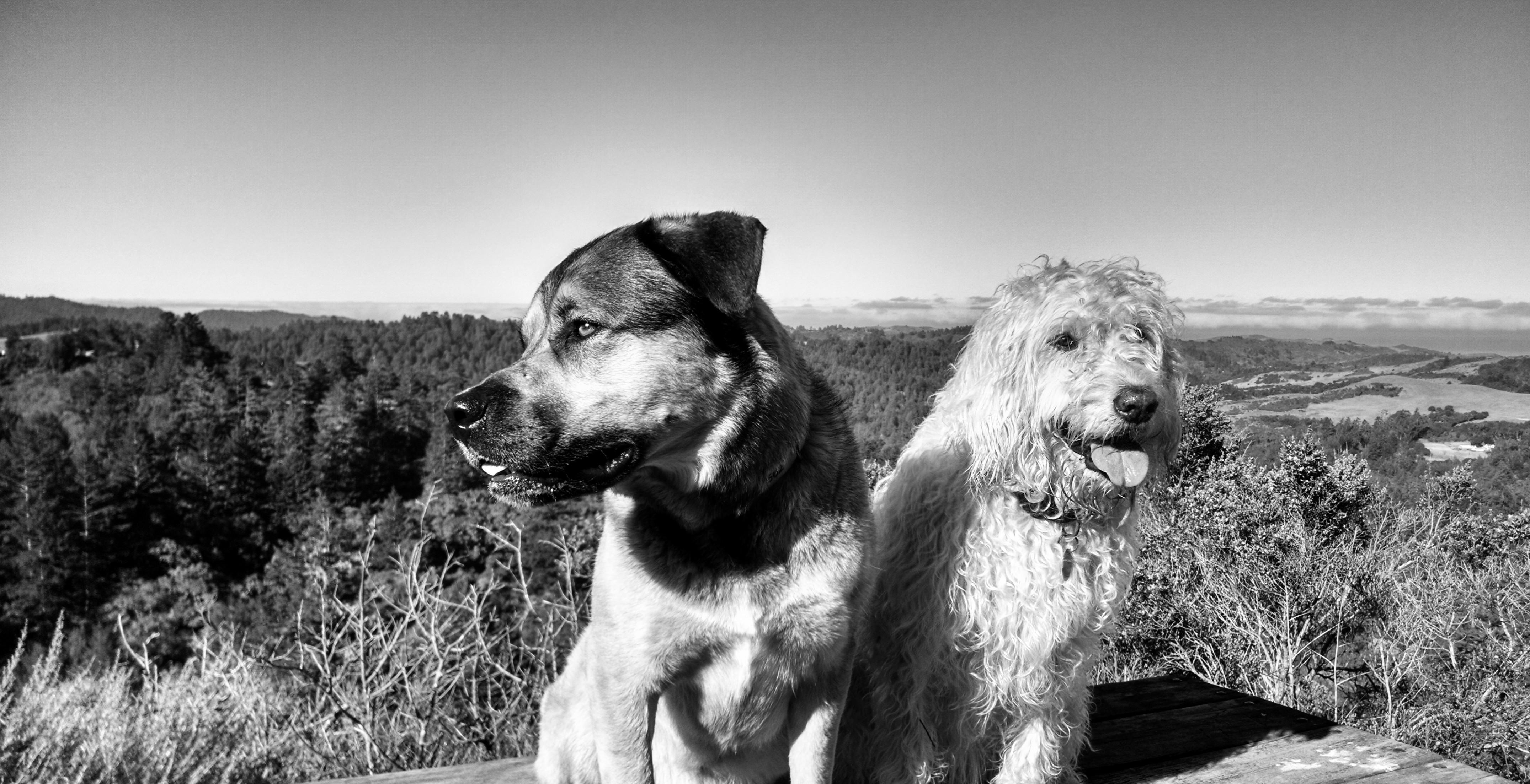 Rascal & Noosa, buddies :-)