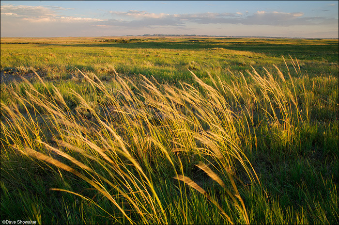 Beautiful prairie grass on the Midwestern plains