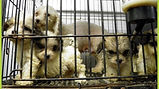 Puppy Mill Bust Ohio SPCA