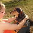 Cat Rescue Ohio SPCA