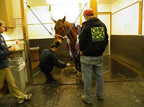 Horse Rescue Response Team Ohio SPCA