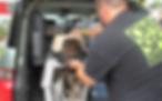 Ohio SPCA Rescue