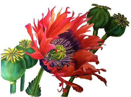Large Poppy Too.jpg