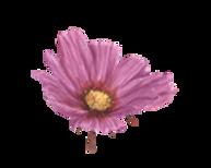 Logo Flowerwo background.png