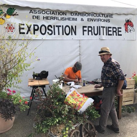 EXPOSITION FRUITIÈRE A HERRLISHEIM
