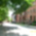 Street trees.png