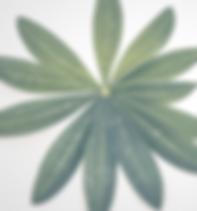 Indie Vibes (2)_edited.png