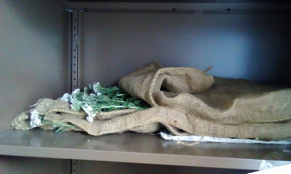 Yarrow in a brown bag, drying out in the cupboard.