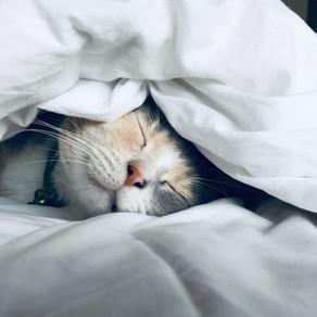 嗨,你還在裝睡嗎?醒醒