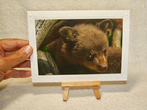 Bear Cub Card