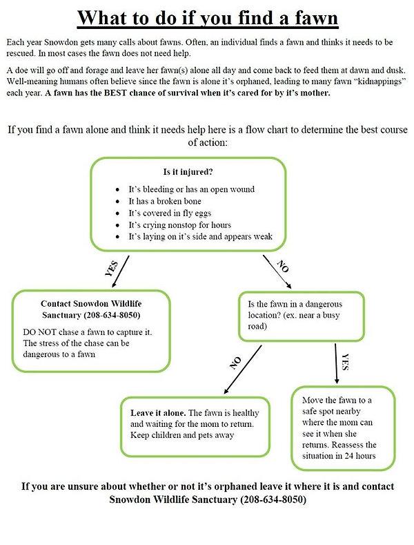 fawn chart.jpg