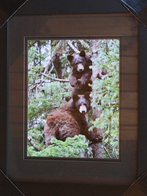 Framed Bear Cubs Photo