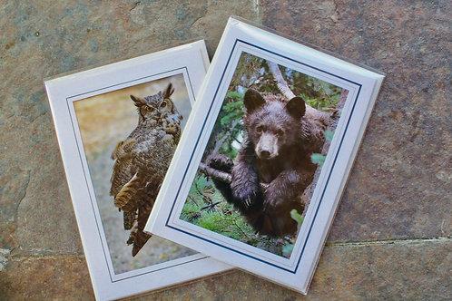 Set of 6 Snowdon Wildlife Cards