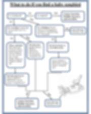 bird chart.jpg