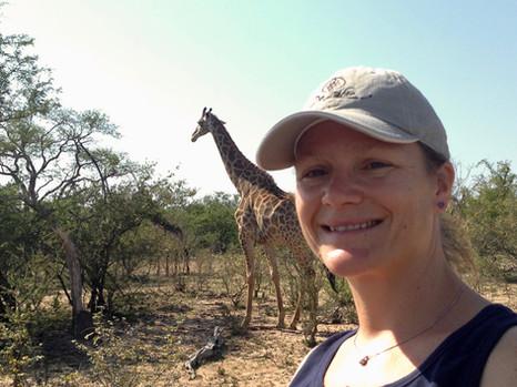 Giraffes - the models of the bush!