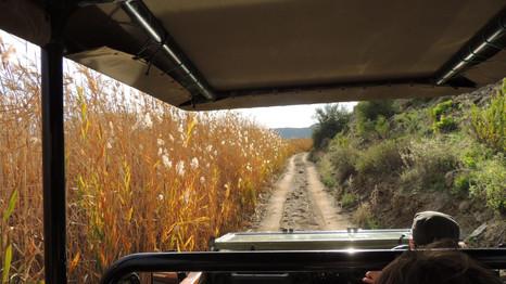 The beautiful vegetation of the Little Karoo!