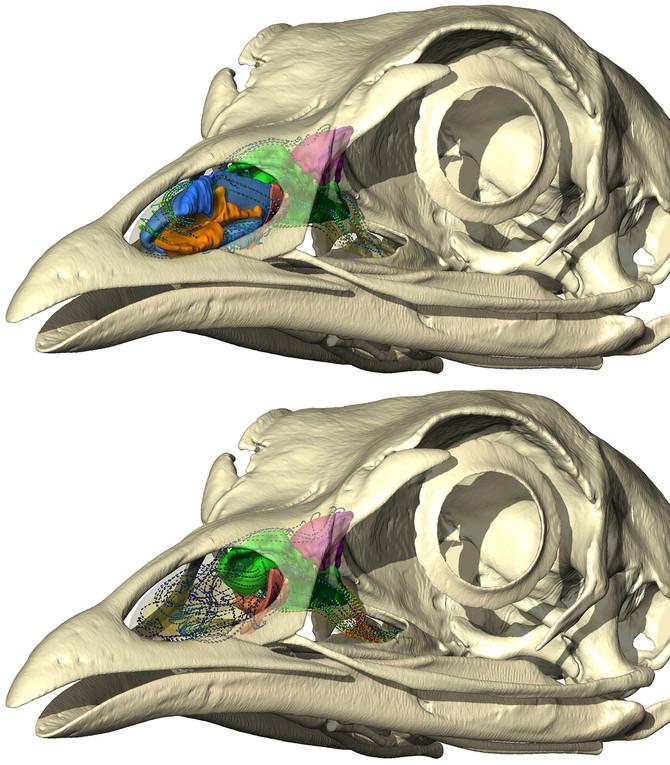 The baffling world of bird noses