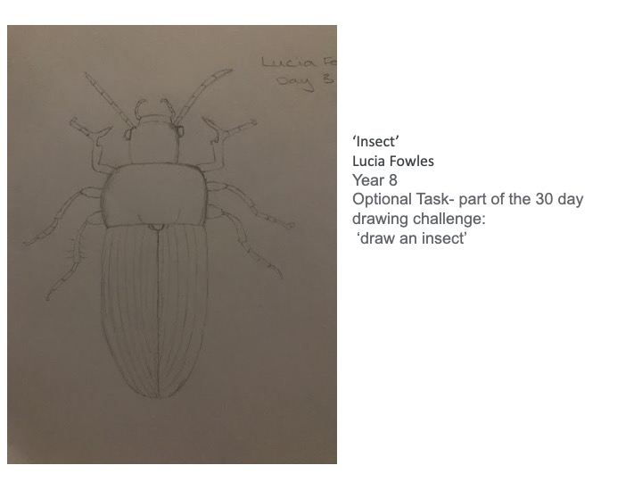 27/04/20 - Insect