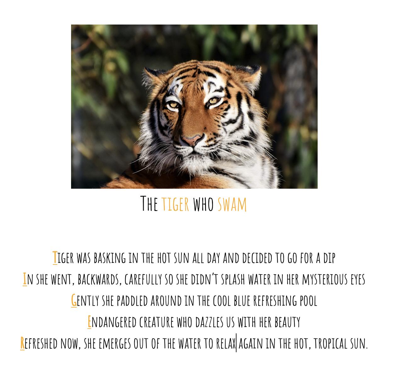 14/05/20 - Tiger Fact Sheet