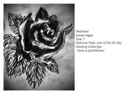 27/04/20 - Red Rose