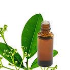 ravintsara-huile-essentielle.jpg