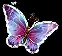 transparent papillon.png