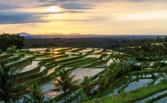 Jatiluwih-Rice Fields