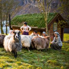 Norsk spelsau