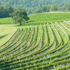 georgia-wineries-200x200.jpg