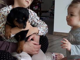 Pups Olana X Chacco vom Rottberg