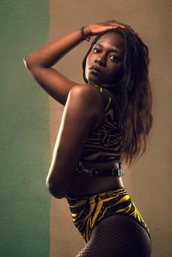 JAMAICAN TIGER